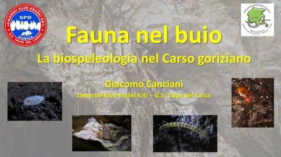 La-biospeleologia-nel-Carso-Goriziano
