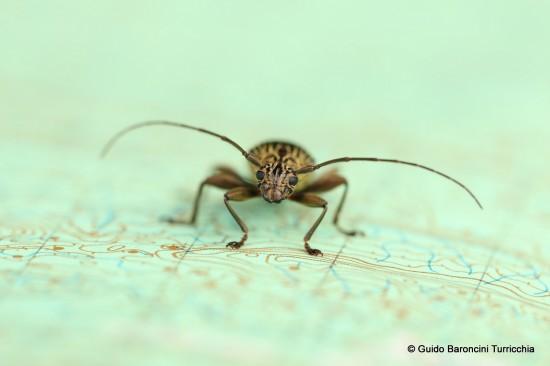 bug-on-map