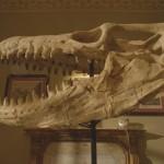 dinosaurs-press-07