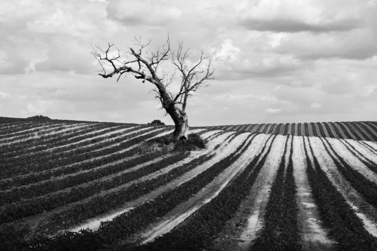 Obiettivo terra - Foto di Andrea Scatolini
