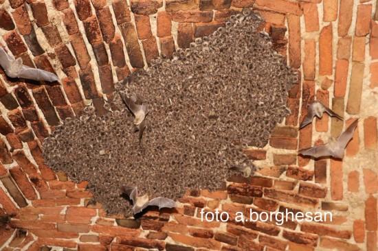 Miniotteri nei sotterranei del Palazzo Ducale di Mantova