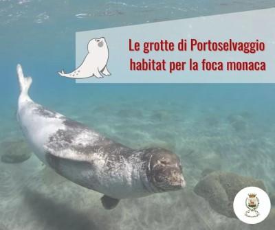 Le grotte di Portoselvaggio Habitat per la Foca Monaca